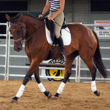 TRT 'Easy' - Lovely solid mare