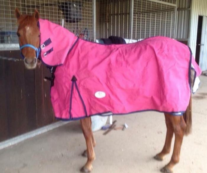BelleVale Equine Attire Canvas Rugs & Combos