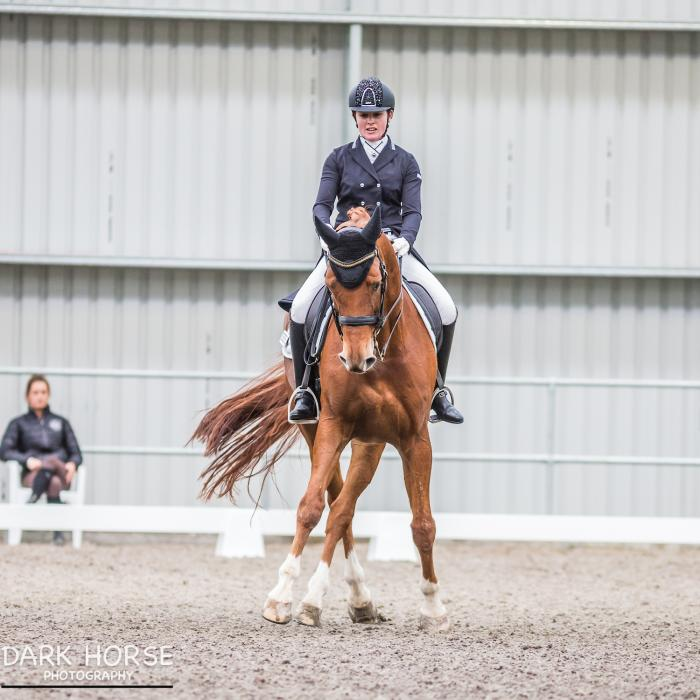 Talented Young Grand Prix Gelding