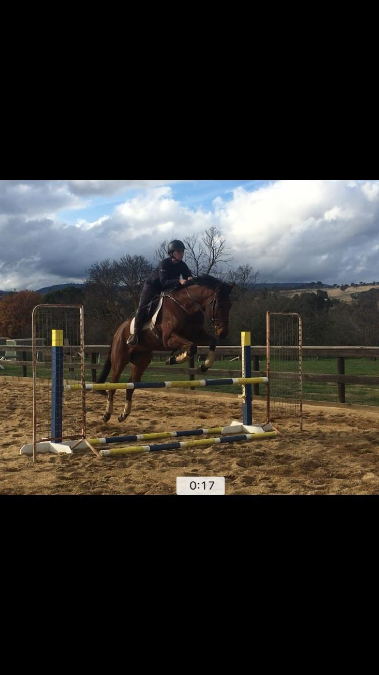 Quality young eventer