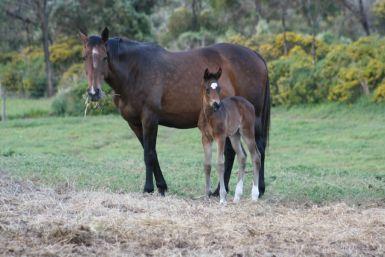 Viva La Vida as a foal 2010