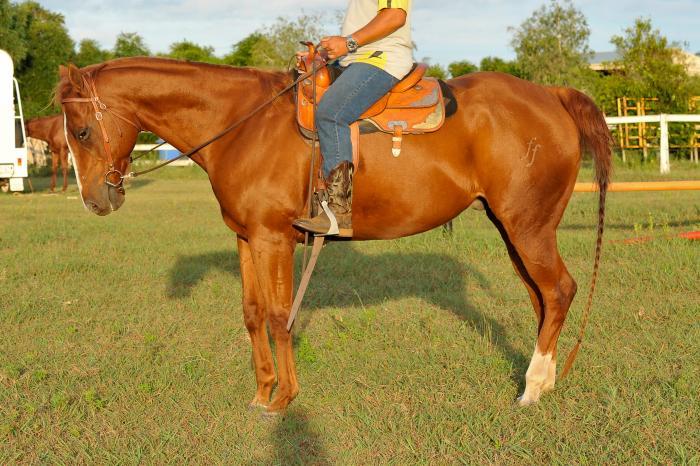 Schoolmaster for the nervous rider