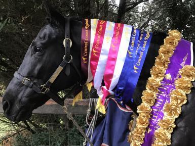 10 June 2018 Supreme All Breeds under saddle