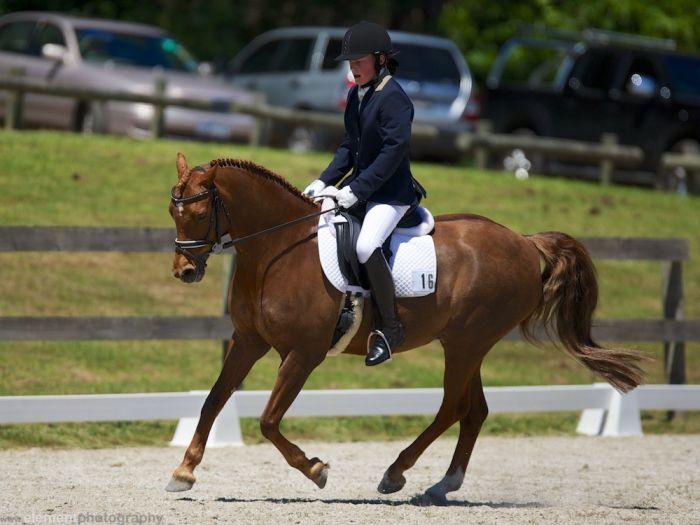 pony dressage champion