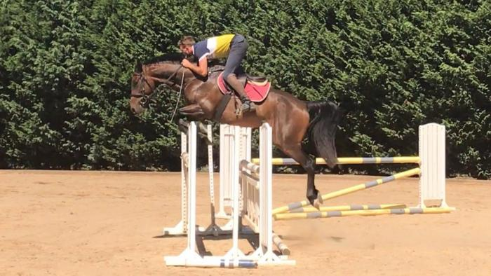 Octagonal X Quest For Fame X Clydie 4yo Gelding