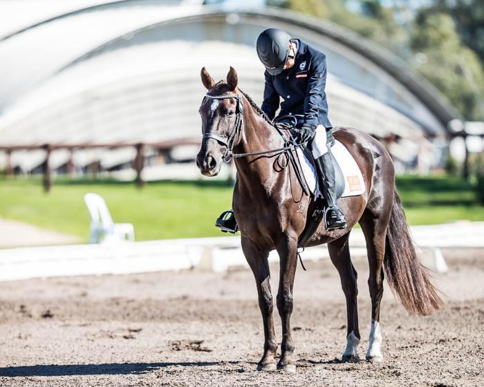 Exceptional Para Dressage Stockhorse