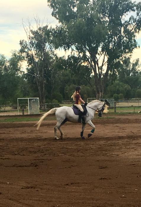 Sir Chance - Quality young riders horse