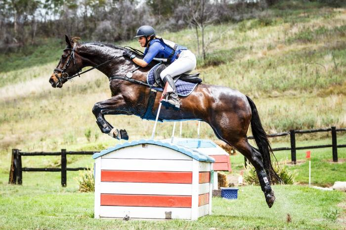 Talented Eventing School Master