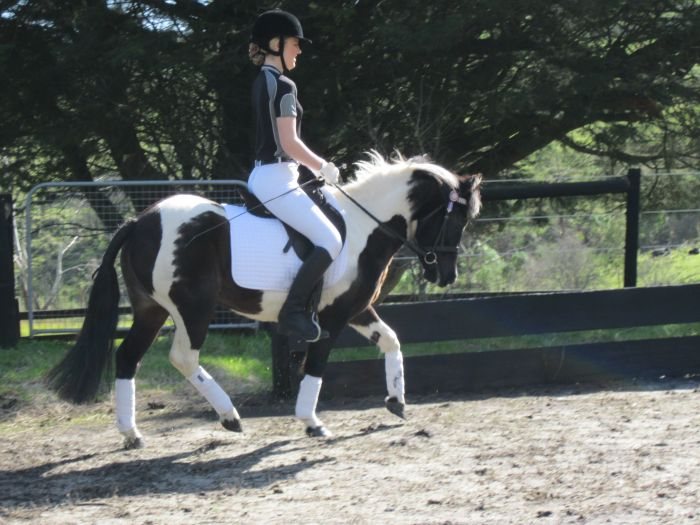 Gorgeous Pinto Childs Pony 12.2hh