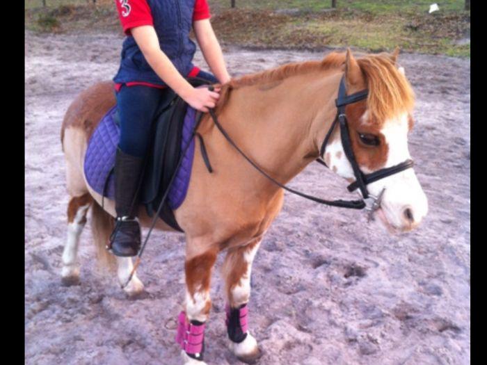 Super child's pony 10.3 hh welsh A gelding