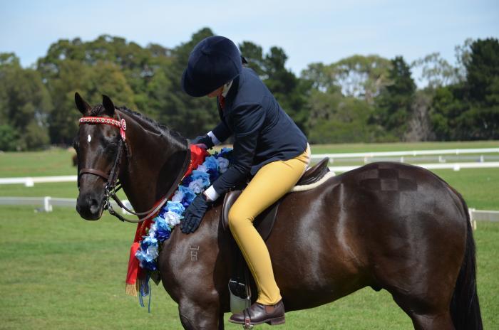 Divine large show pony