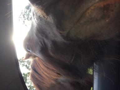 smooching me in the car