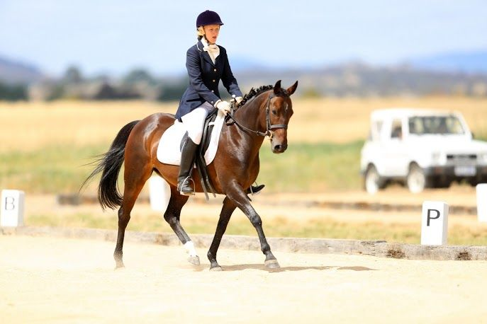 Stunning performance pony - video added