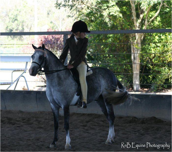 stunning show pony