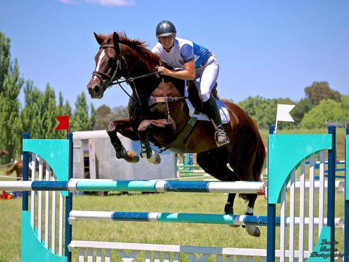 Ultimate Juniors/ Amateurs horse