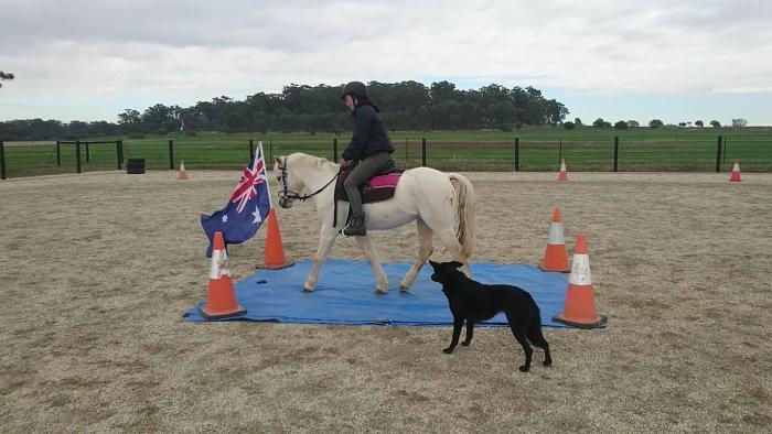 Lovely lead rein pony