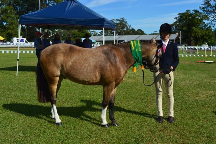 Wow Factor Pony