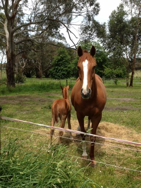 Broodmare free to good home