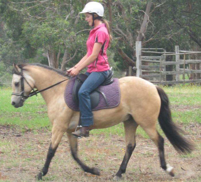 PERFORMANCE SHOW PONY - ALL ROUNDER