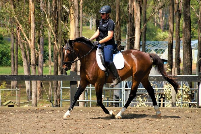 Stunning Brown Gelding 8yo