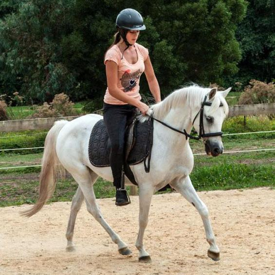 Pony Club / Jumping Mare