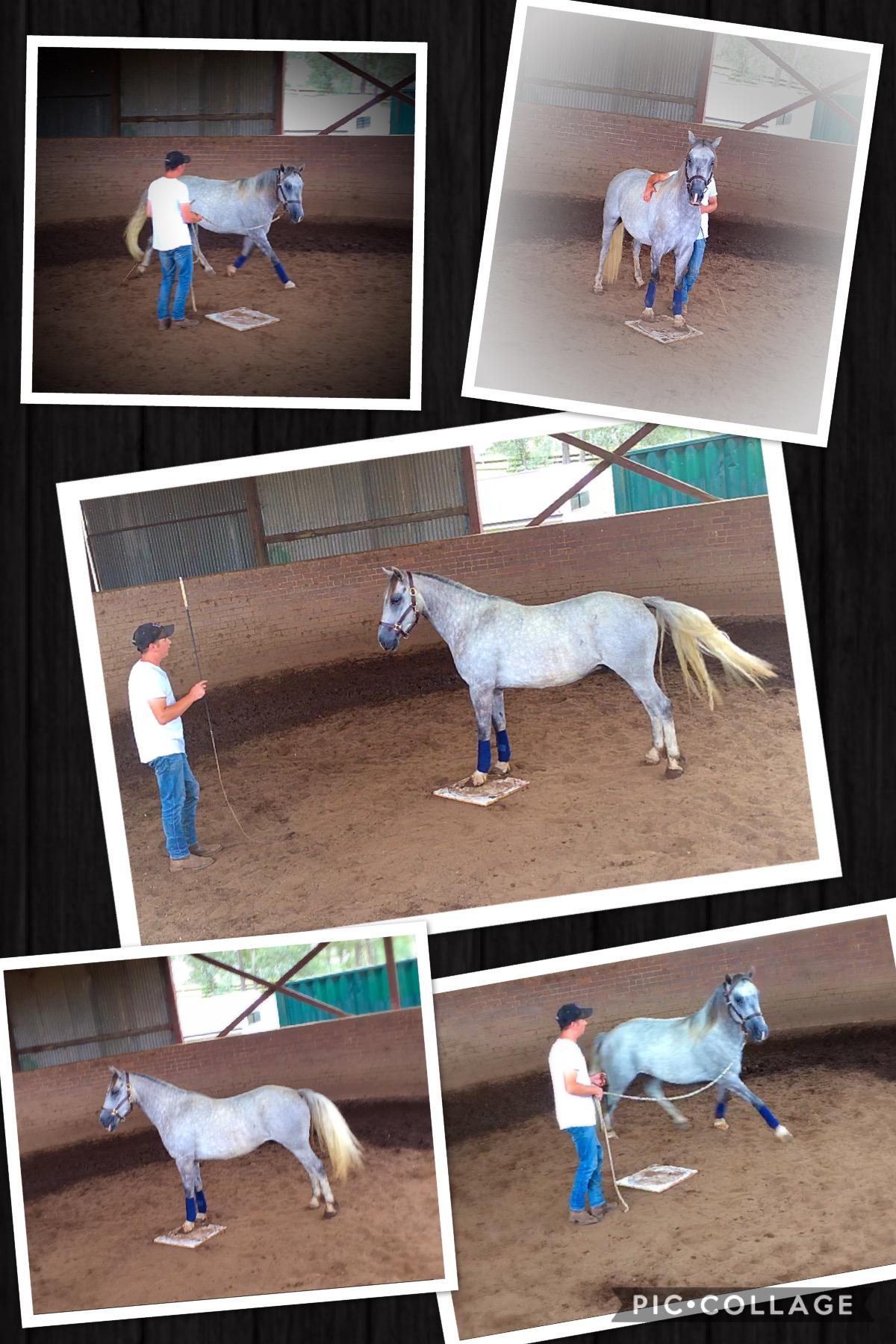 Horses started under saddle, training, problem horses