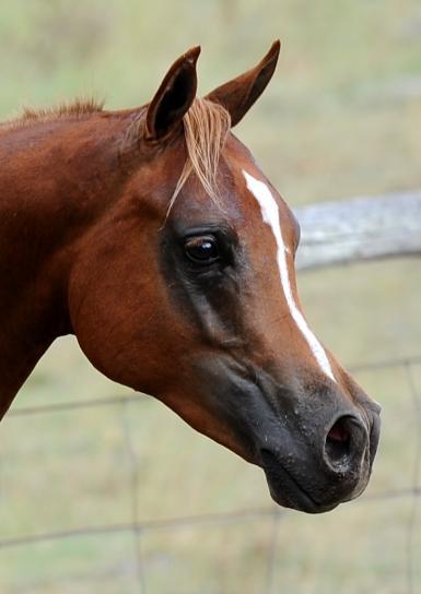 Amber's colt