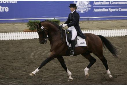 Jive Magic Service Fee - Young Dressage