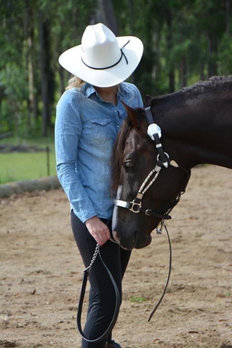 Eatons Hill Stud- Sport horse Morgan