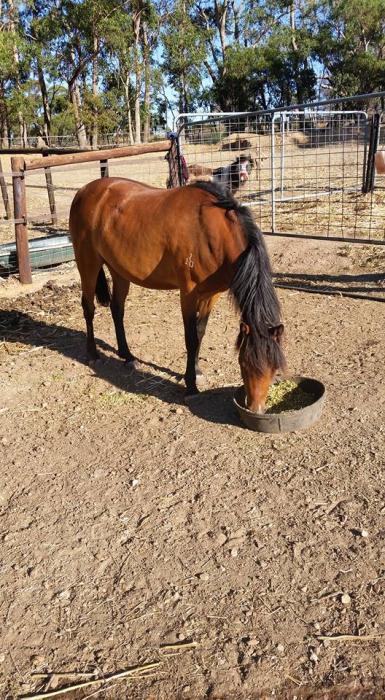 Stunning small mare