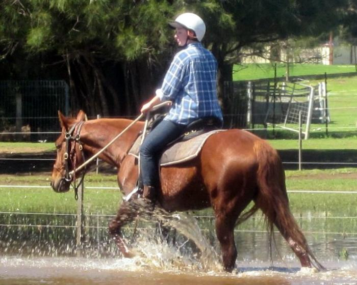 Quiet Quality Red QH Mare + VIDEO++