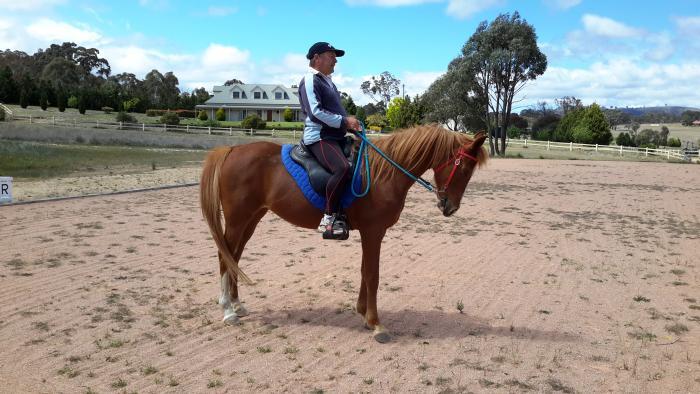 Arab mare 14.2hh Chestnut