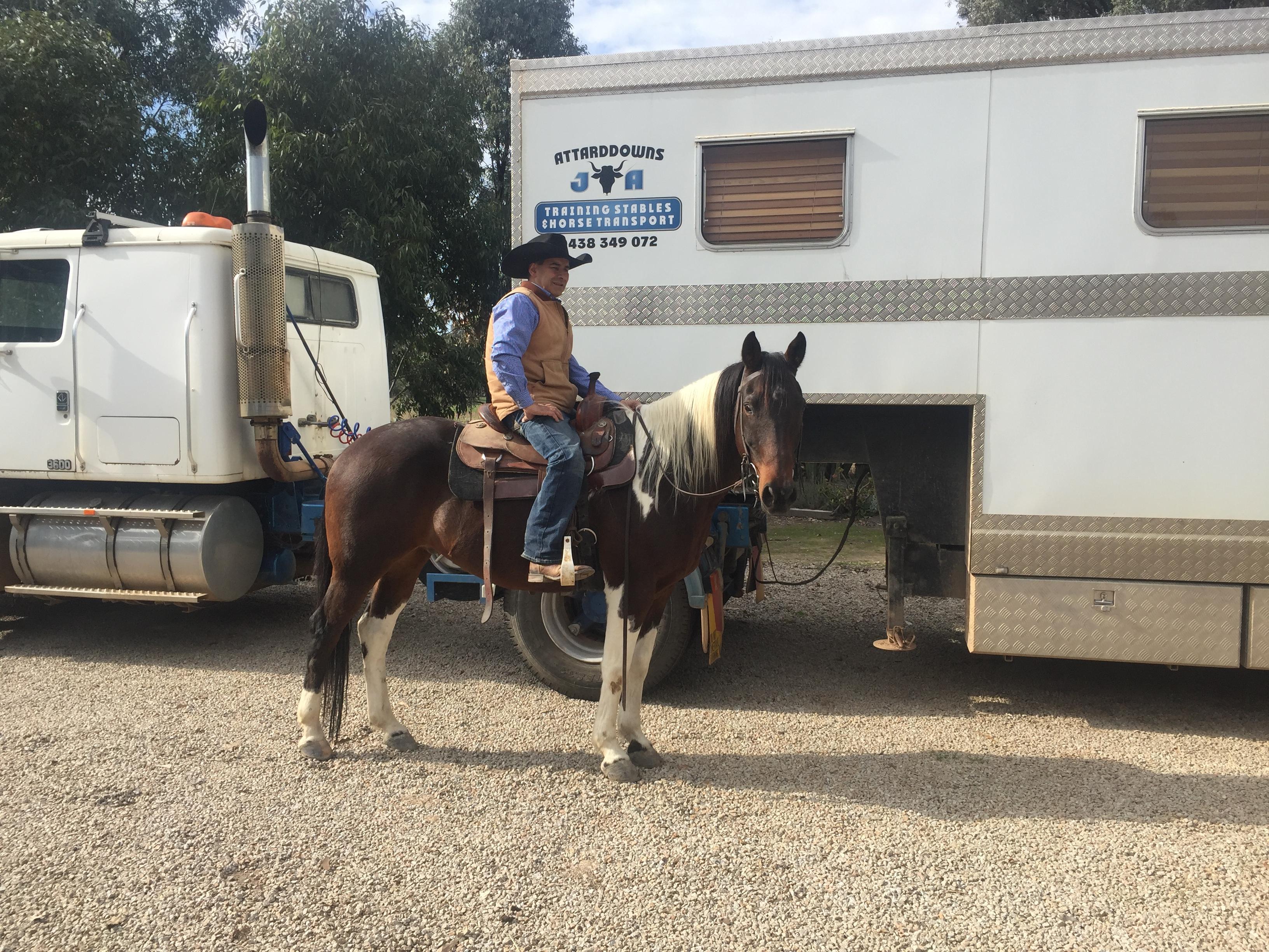 Quiet Trail Riding Horse