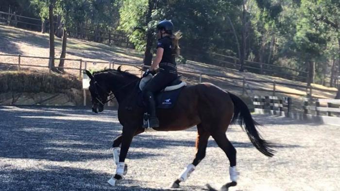 Diva Tessa: very talented future performance horse