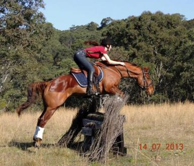 Spunky training cross country with his previous owner