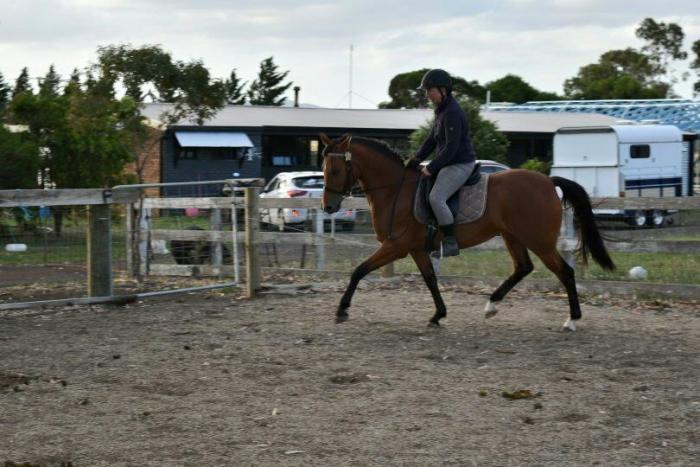 Pony Dressage Galloway Morgan