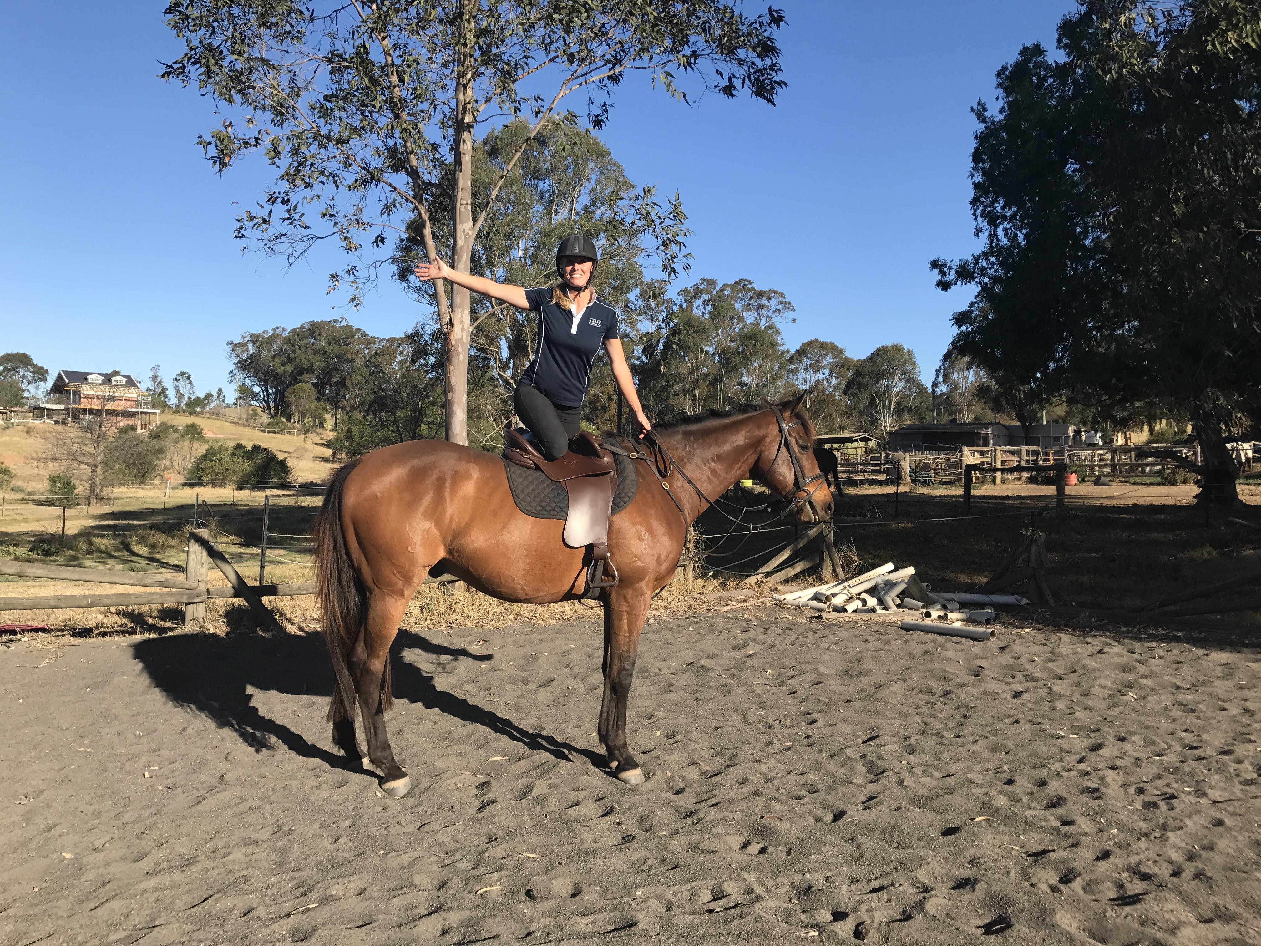 Quiet Trail/ pleasure horse