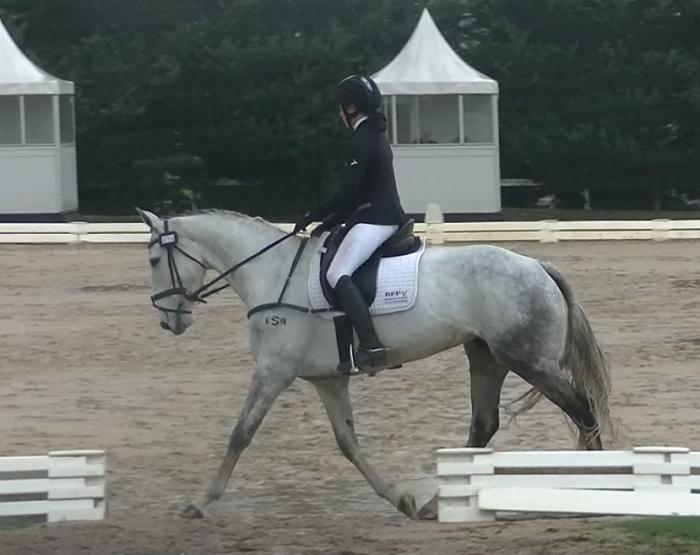 Talented young dressage/event horse