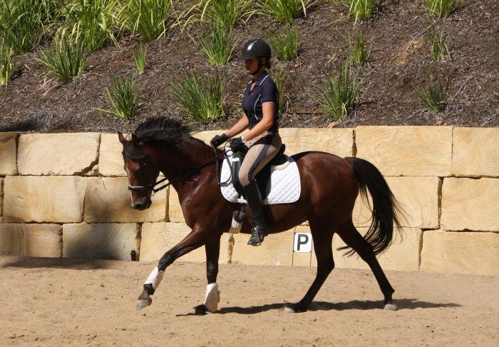 TALENTED AND PRETTY INTERSCHOOL/SHOW PONY