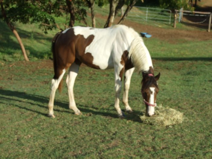 BAY/WHITE YEARLING FILLY