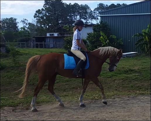 Ponyclub Schoolmaster