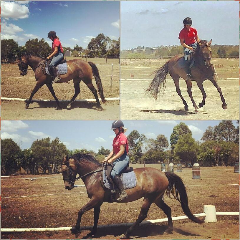 Beautiful Buckskin mare QH x