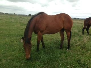My Reet Petite Beautiful  Mare Needs A Home