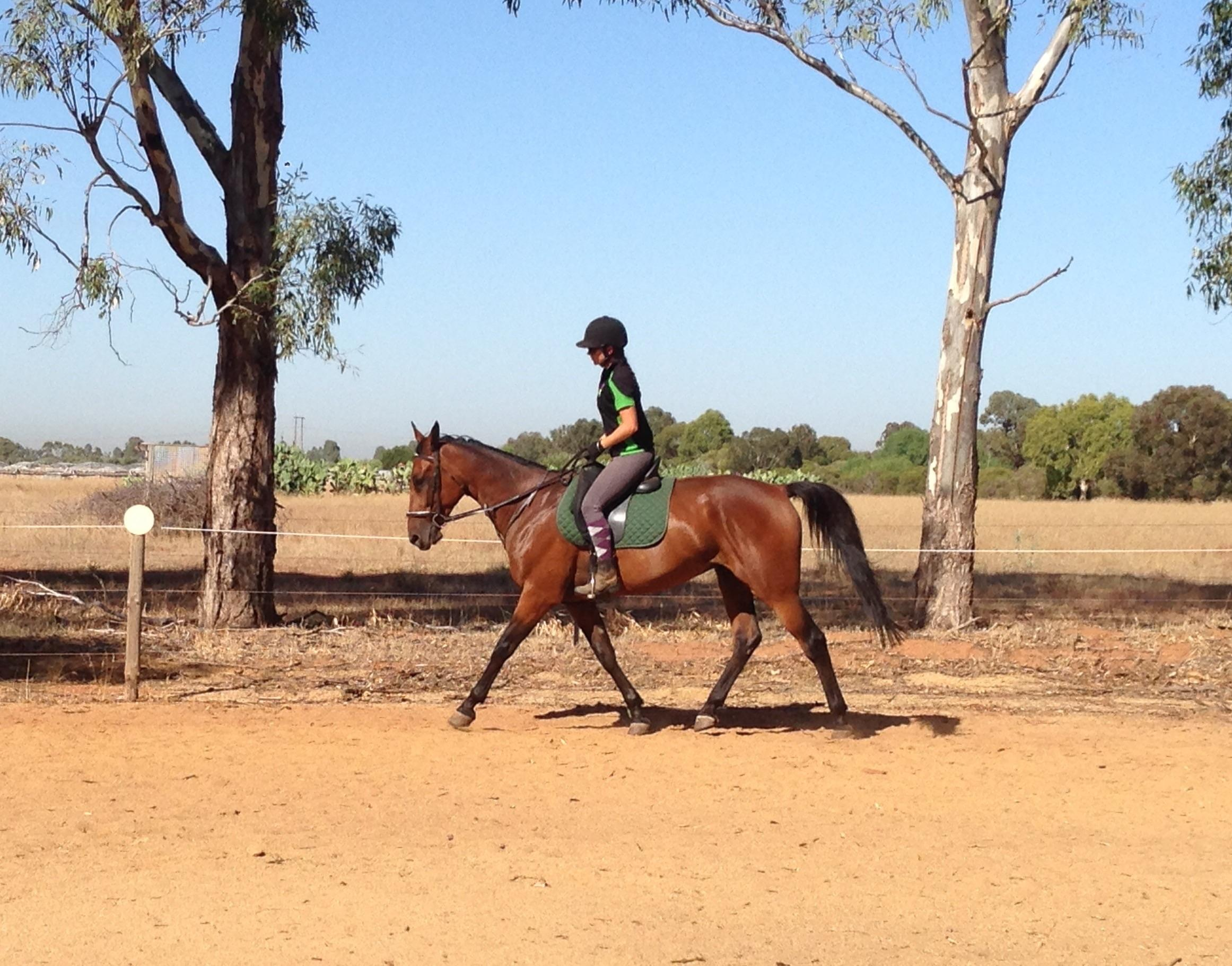 Dynamite Trail Horse: Stunning Canter