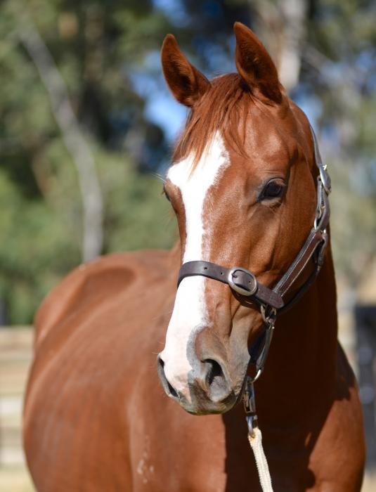 ESB horses
