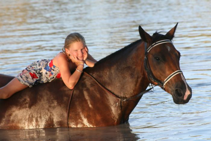 Outstanding, Smart, Quiet 9 yr old ASH/QH Mare