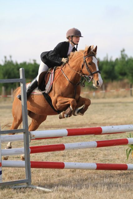 Exceptional Performance Pony