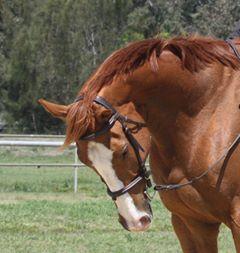 Friendly gelding with striking looks