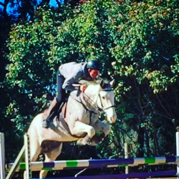 - PRICE REDUCED - Talented Showjumper