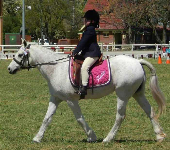 Schoolmaster dream pony
